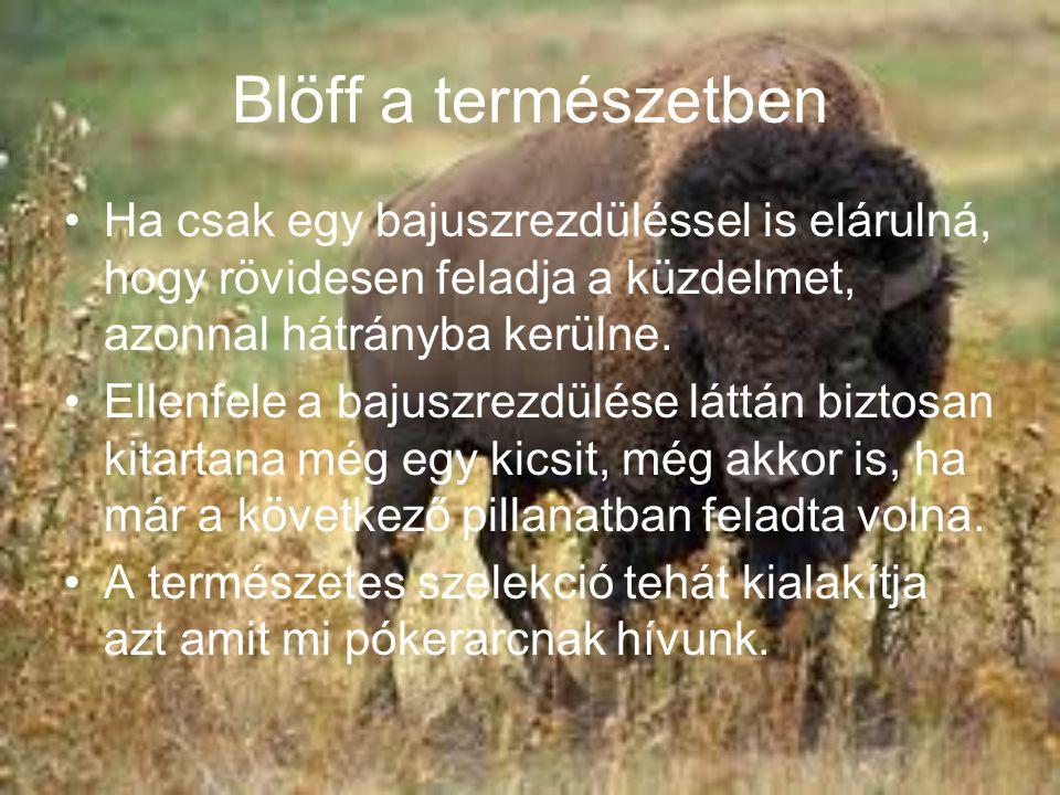 Blöff a természetben Ha csak egy bajuszrezdüléssel is elárulná, hogy rövidesen feladja a küzdelmet, azonnal hátrányba kerülne.
