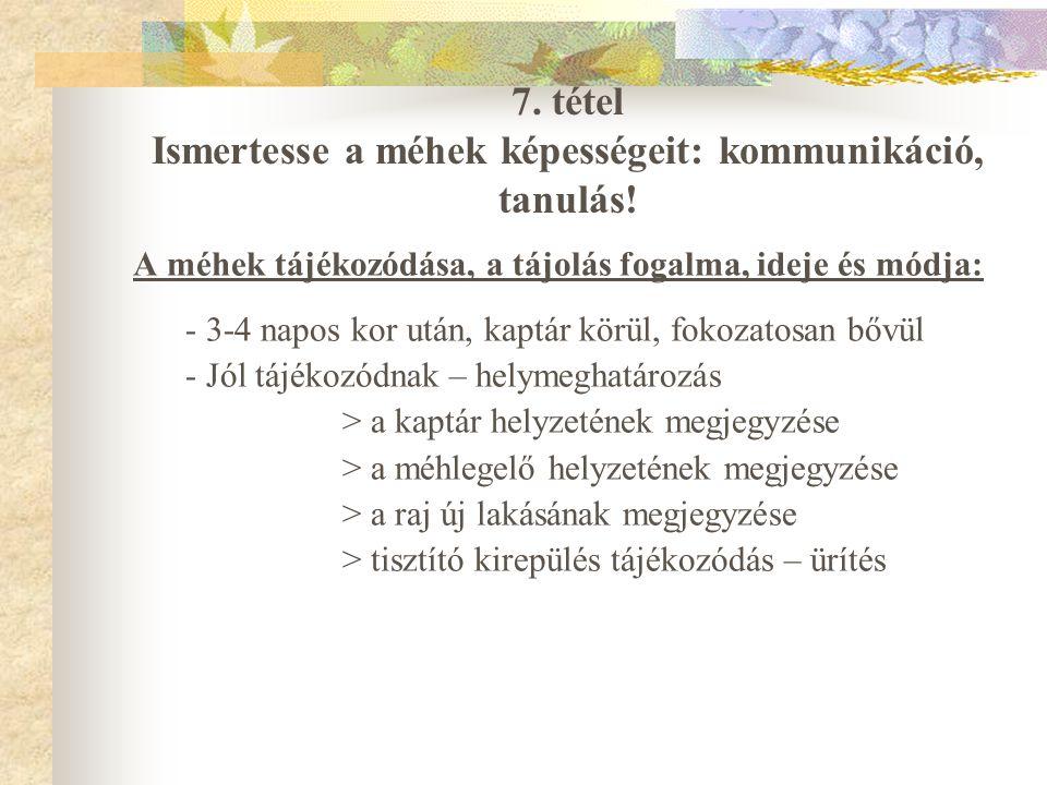 7. tétel Ismertesse a méhek képességeit: kommunikáció, tanulás!