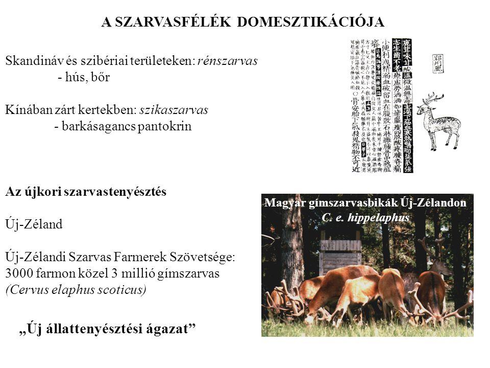 A SZARVASFÉLÉK DOMESZTIKÁCIÓJA Magyar gímszarvasbikák Új-Zélandon