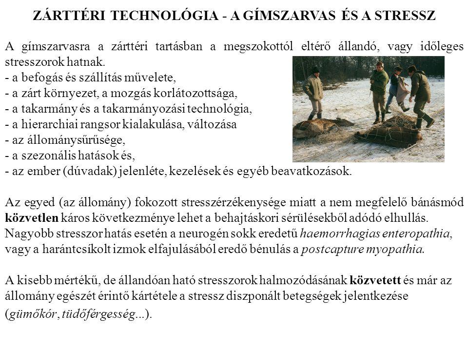 ZÁRTTÉRI TECHNOLÓGIA - A GÍMSZARVAS ÉS A STRESSZ
