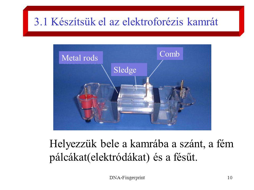 3.1 Készítsük el az elektroforézis kamrát