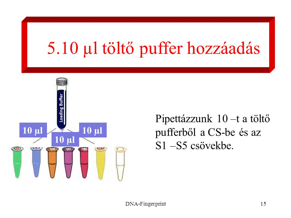 5.10 µl töltő puffer hozzáadás