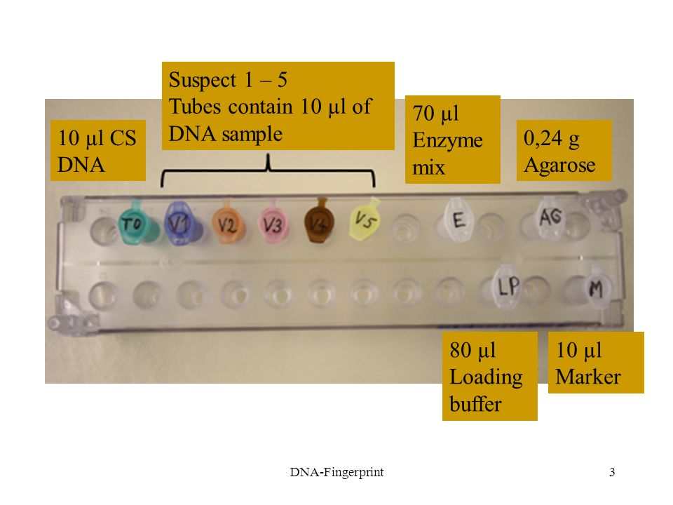 Tubes contain 10 µl of DNA sample 70 µl Enzyme mix 10 µl CS DNA 0,24 g