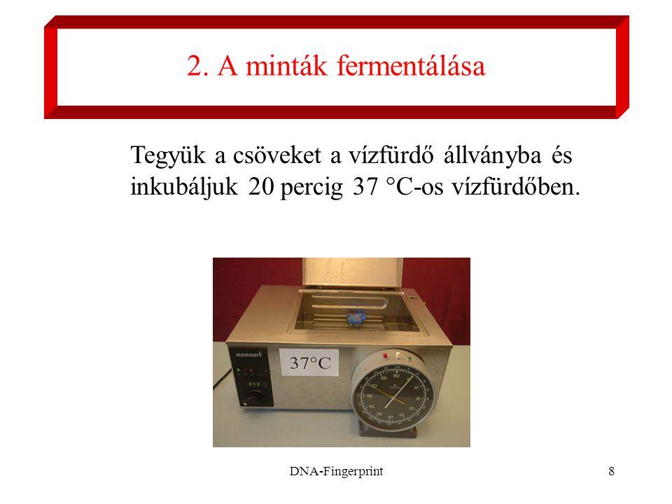 2. A minták fermentálása Tegyük a csöveket a vízfürdő állványba és inkubáljuk 20 percig 37 °C-os vízfürdőben.