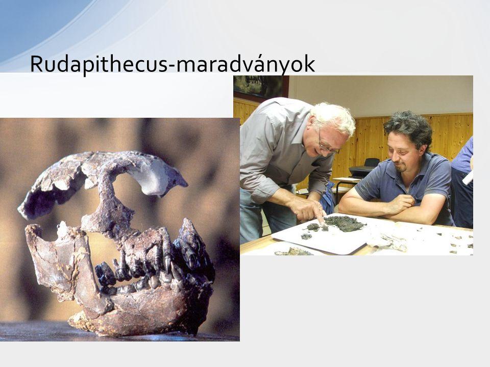 Rudapithecus-maradványok