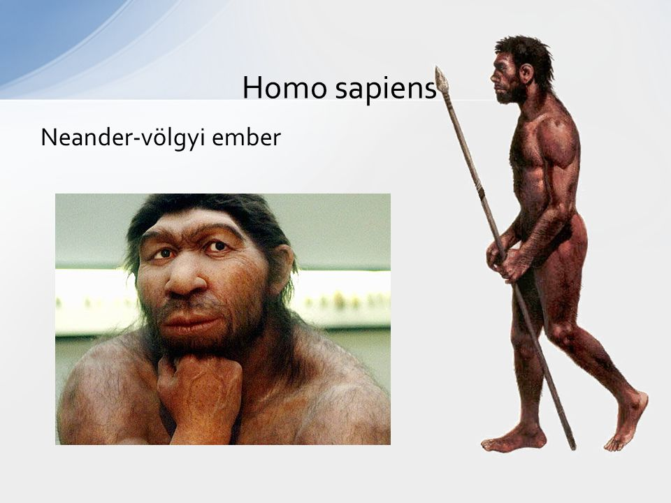 Homo sapiens Neander-völgyi ember