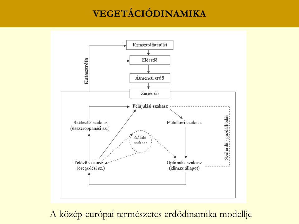 A közép-európai természetes erdődinamika modellje