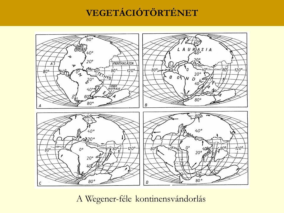 VEGETÁCIÓTÖRTÉNET A Wegener-féle kontinensvándorlás