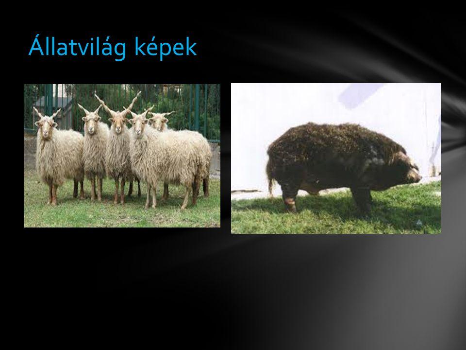 Állatvilág képek
