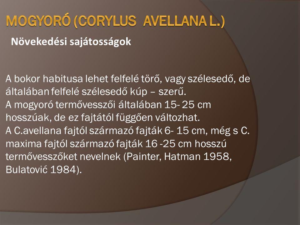 MOGYORÓ (Corylus avellana L.)