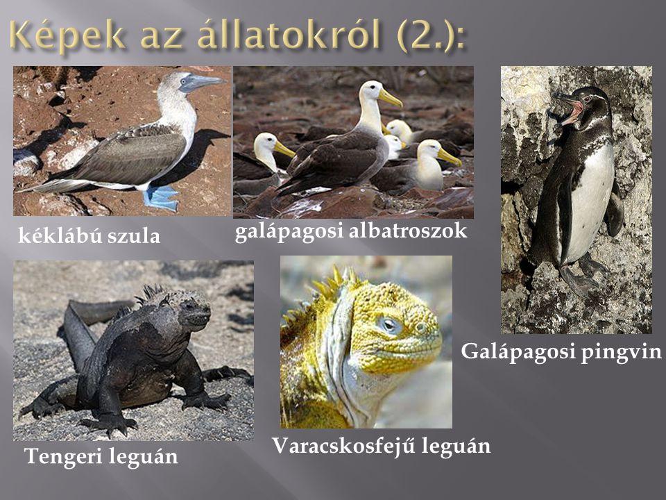 Képek az állatokról (2.):