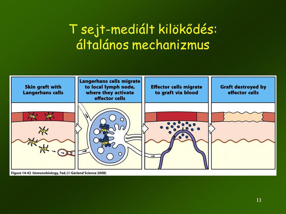 T sejt-mediált kilökődés: általános mechanizmus