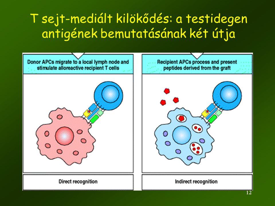 T sejt-mediált kilökődés: a testidegen antigének bemutatásának két útja