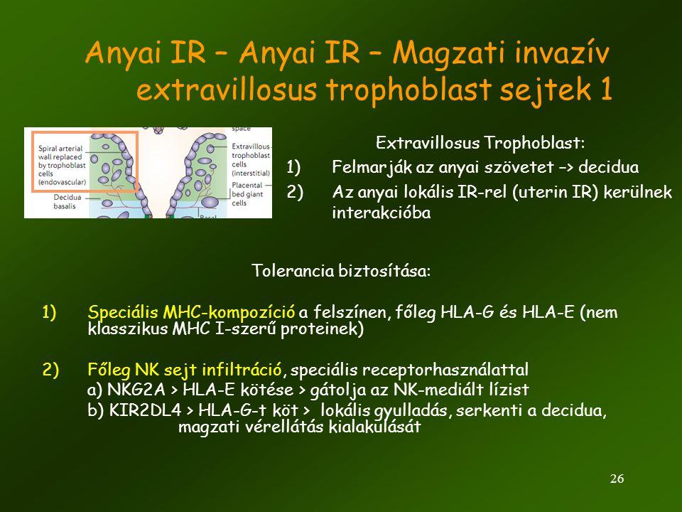 Anyai IR – Anyai IR – Magzati invazív extravillosus trophoblast sejtek 1