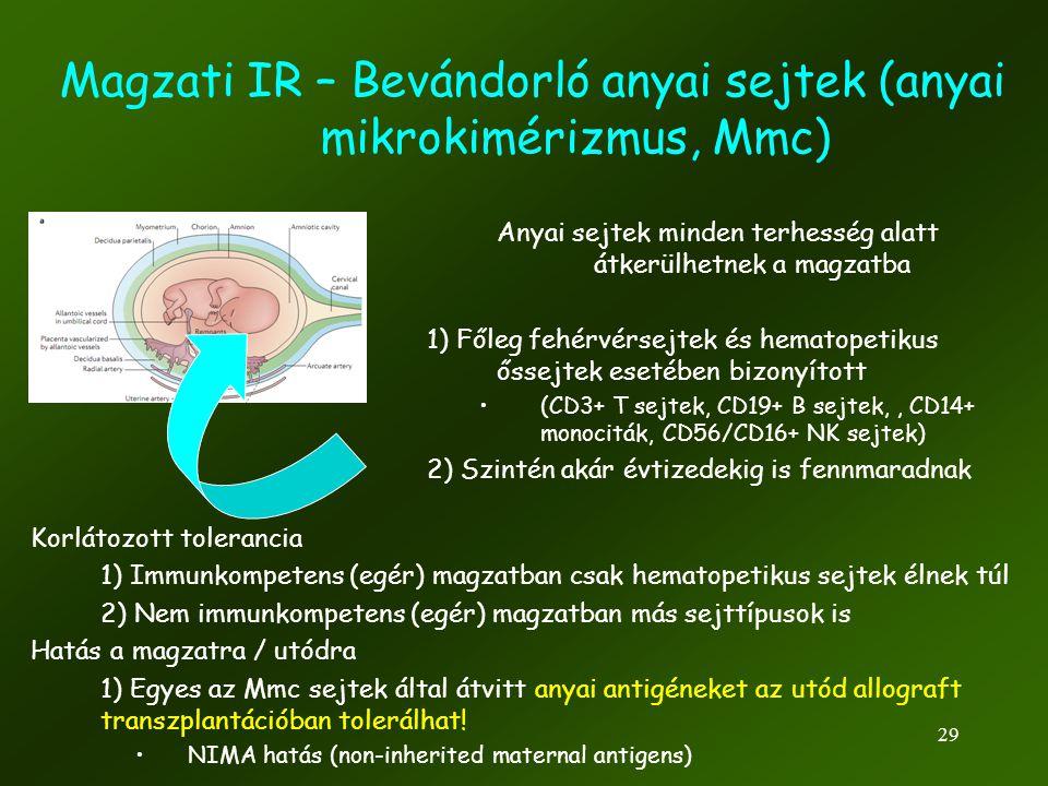 Magzati IR – Bevándorló anyai sejtek (anyai mikrokimérizmus, Mmc)