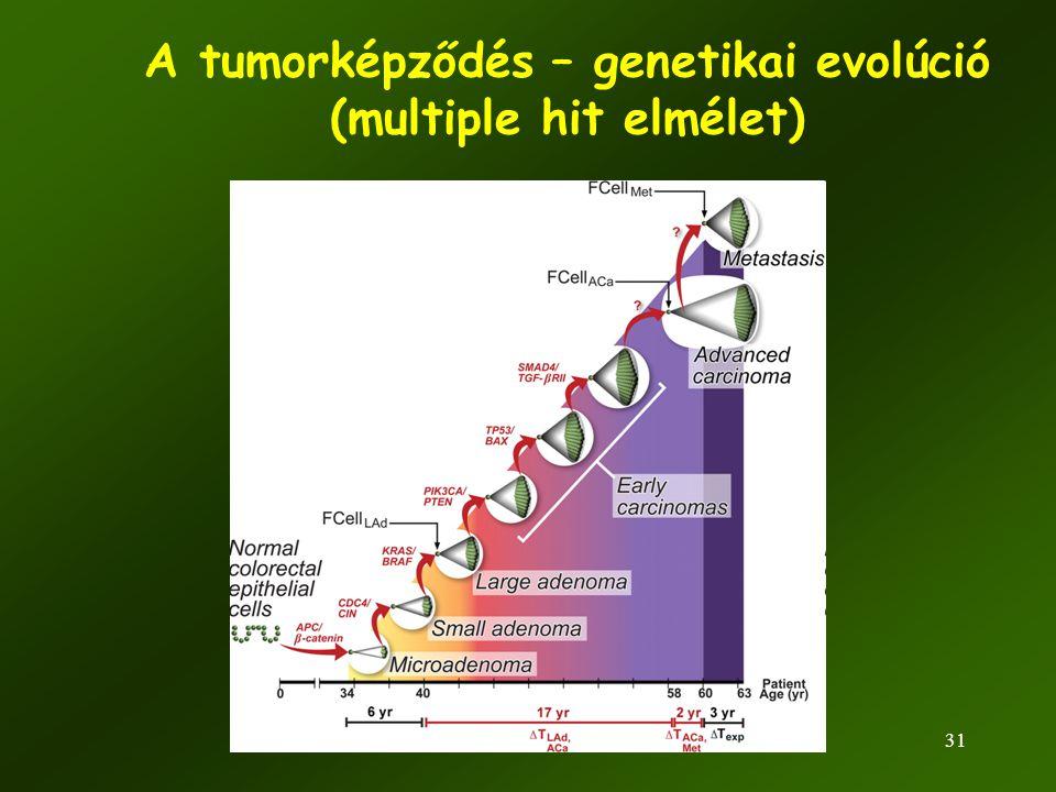 A tumorképződés – genetikai evolúció (multiple hit elmélet)