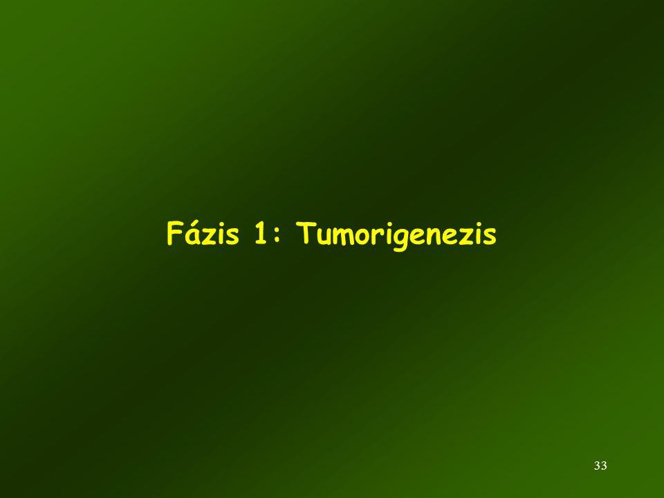 Fázis 1: Tumorigenezis