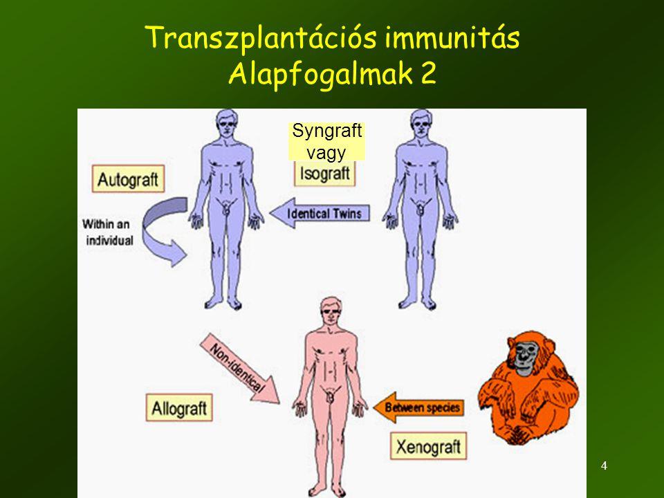 Transzplantációs immunitás Alapfogalmak 2