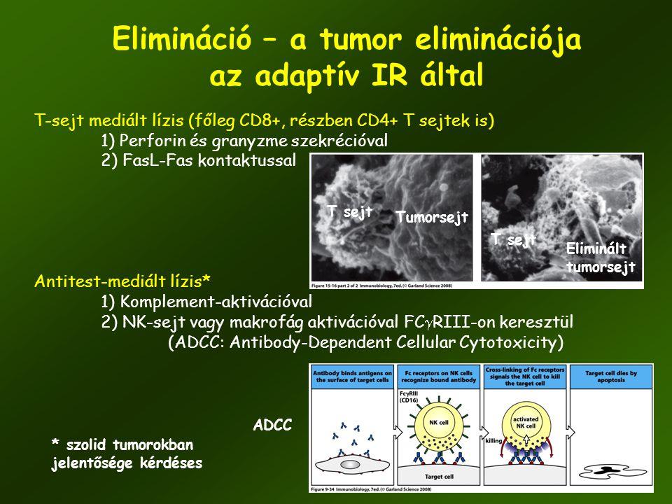Elimináció – a tumor eliminációja az adaptív IR által