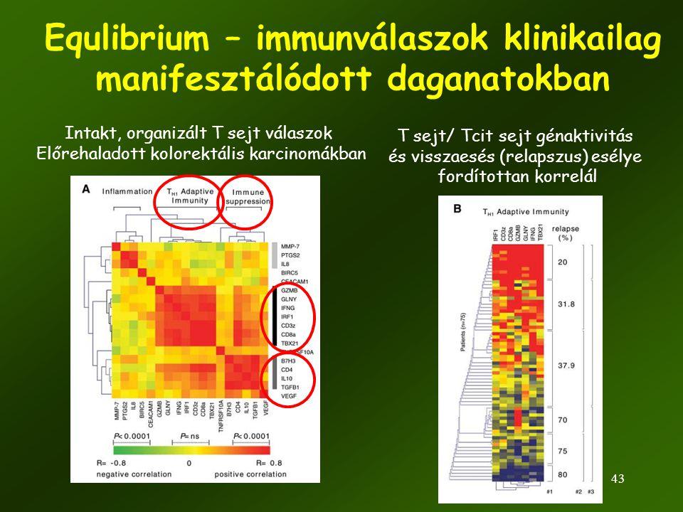 Equlibrium – immunválaszok klinikailag manifesztálódott daganatokban