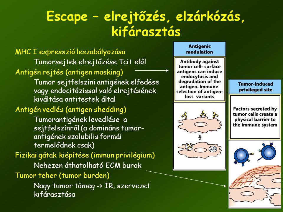 Escape – elrejtőzés, elzárkózás, kifárasztás