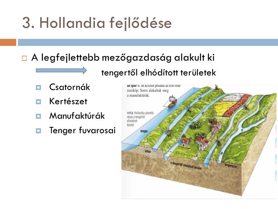3. Hollandia fejlődése A legfejlettebb mezőgazdaság alakult ki