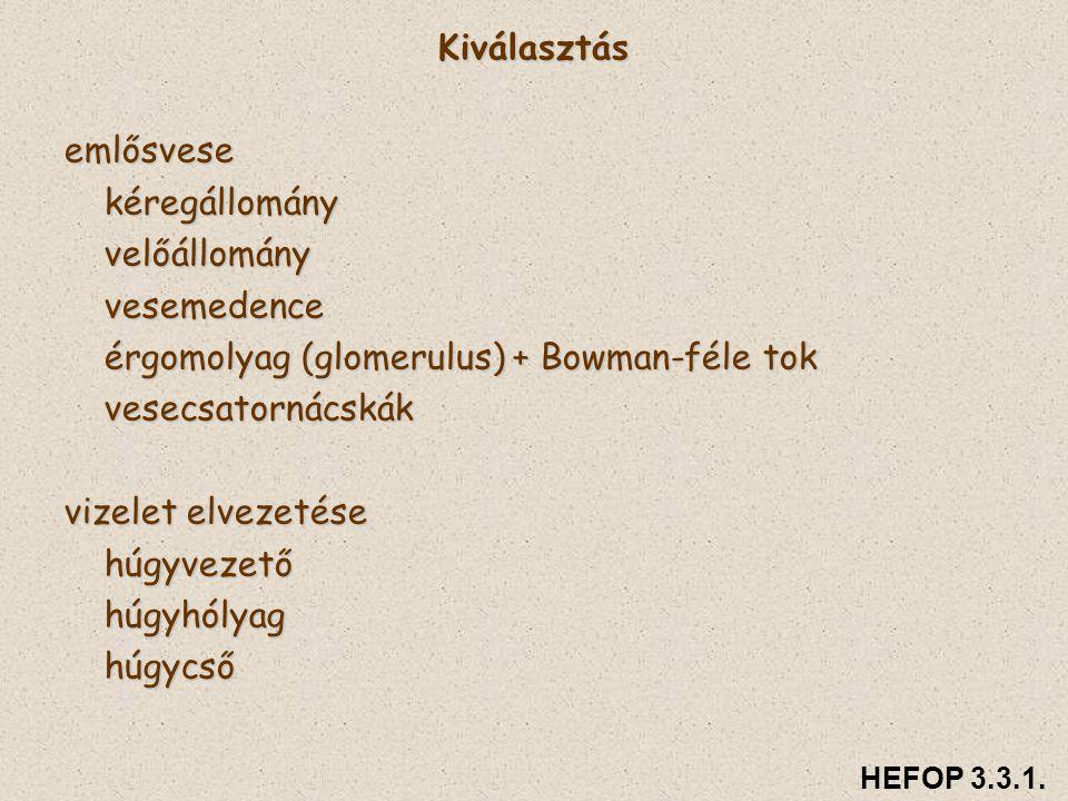 érgomolyag (glomerulus) + Bowman-féle tok vesecsatornácskák