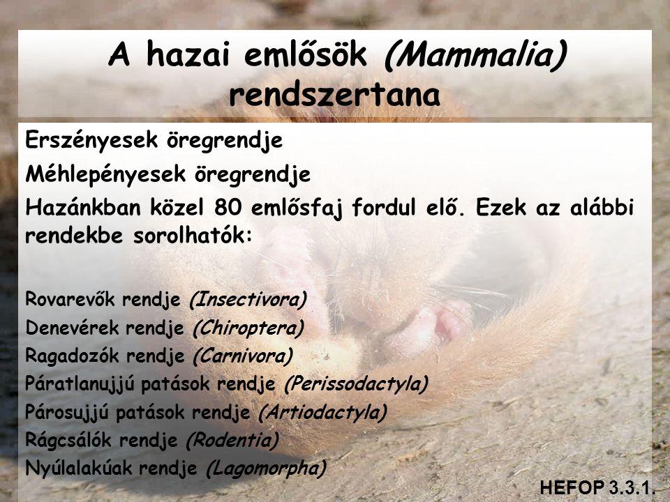 A hazai emlősök (Mammalia) rendszertana