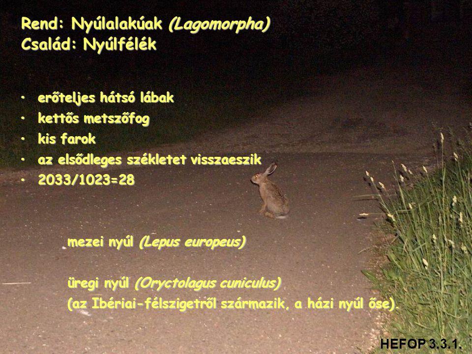 Rend: Nyúlalakúak (Lagomorpha) Család: Nyúlfélék