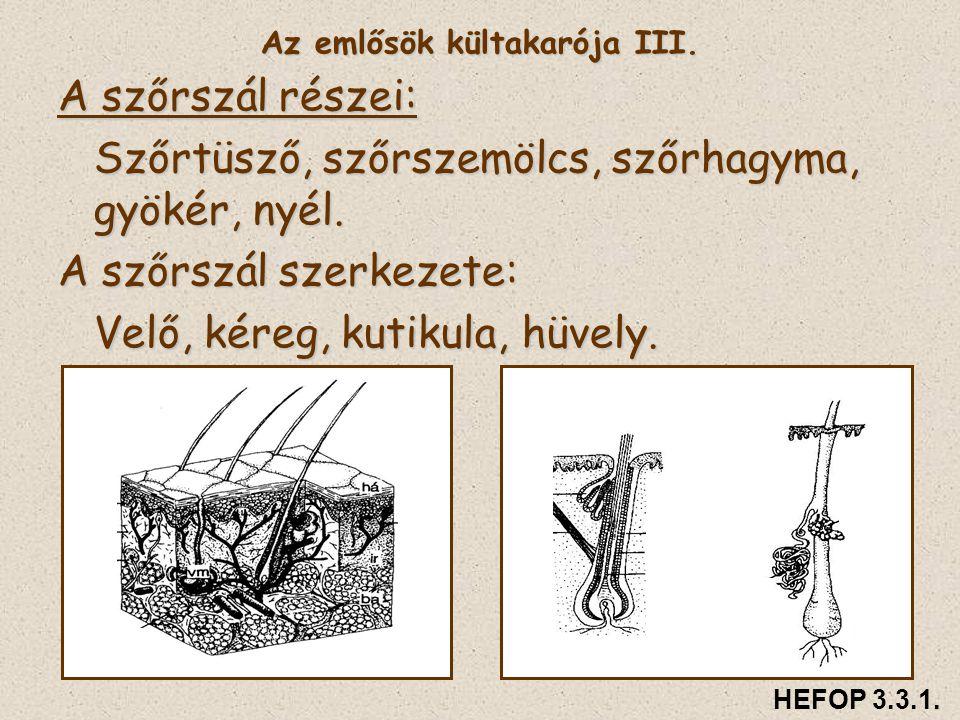 Az emlősök kültakarója III.