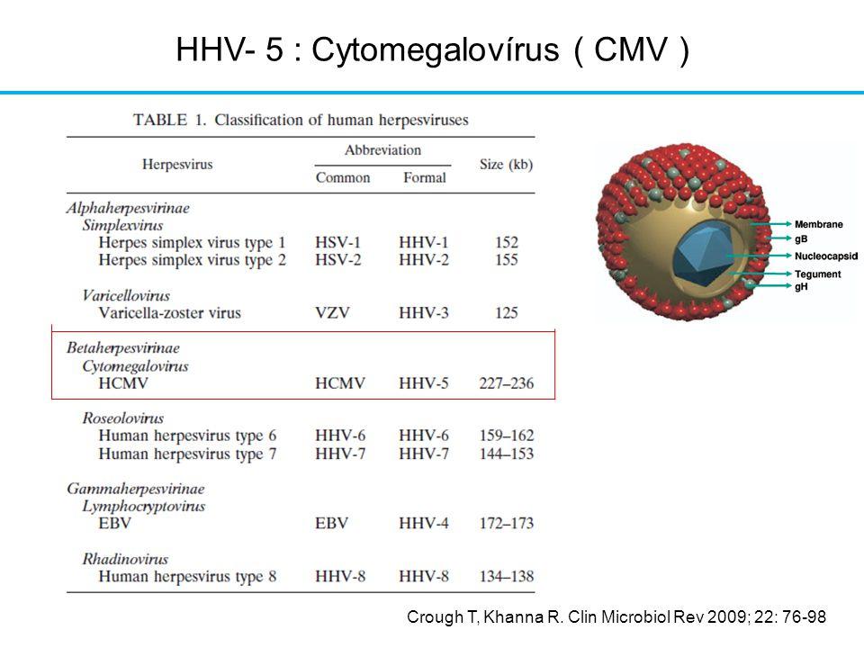 HHV- 5 : Cytomegalovírus ( CMV )