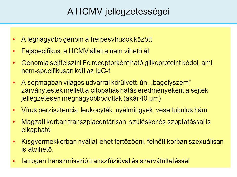A HCMV jellegzetességei