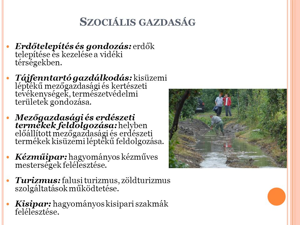 Szociális gazdaság Erdőtelepítés és gondozás: erdők telepítése és kezelése a vidéki térségekben.