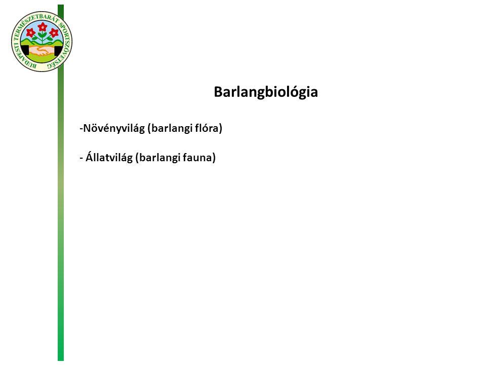 Barlangbiológia Növényvilág (barlangi flóra)