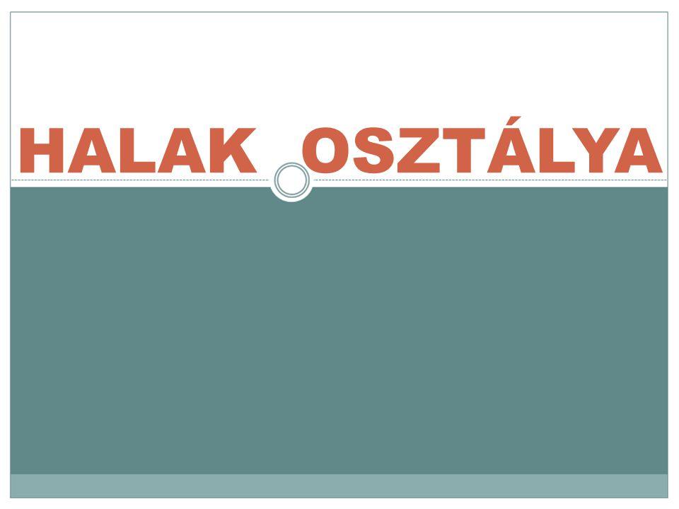 HALAK OSZTÁLYA