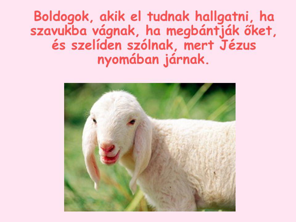 Boldogok, akik el tudnak hallgatni, ha szavukba vágnak, ha megbántják őket, és szelíden szólnak, mert Jézus nyomában járnak.