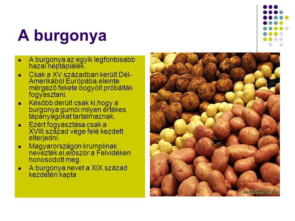 A burgonya A burgonya az egyik legfontosabb hazai néptáplálék.