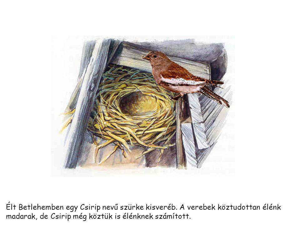 Élt Betlehemben egy Csirip nevű szürke kisveréb