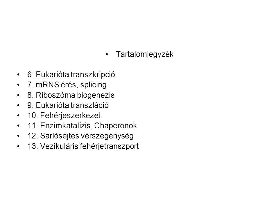 Tartalomjegyzék 6. Eukarióta transzkripció. 7. mRNS érés, splicing. 8. Riboszóma biogenezis. 9. Eukarióta transzláció.