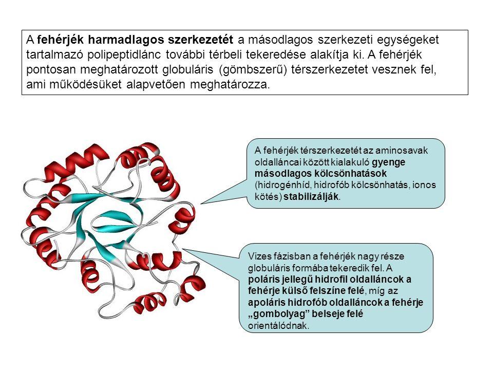 A fehérjék harmadlagos szerkezetét a másodlagos szerkezeti egységeket tartalmazó polipeptidlánc további térbeli tekeredése alakítja ki. A fehérjék pontosan meghatározott globuláris (gömbszerű) térszerkezetet vesznek fel, ami működésüket alapvetően meghatározza.