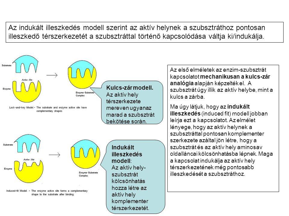 Az indukált illeszkedés modell szerint az aktív helynek a szubsztráthoz pontosan illeszkedő térszerkezetét a szubsztráttal történő kapcsolódása váltja ki/indukálja.