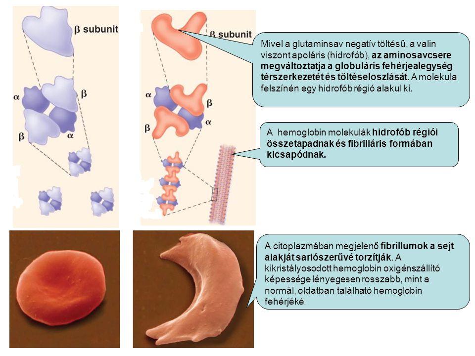 Mivel a glutaminsav negatív töltésű, a valin viszont apoláris (hidrofób), az aminosavcsere megváltoztatja a globuláris fehérjealegység térszerkezetét és töltéseloszlását. A molekula felszínén egy hidrofób régió alakul ki.