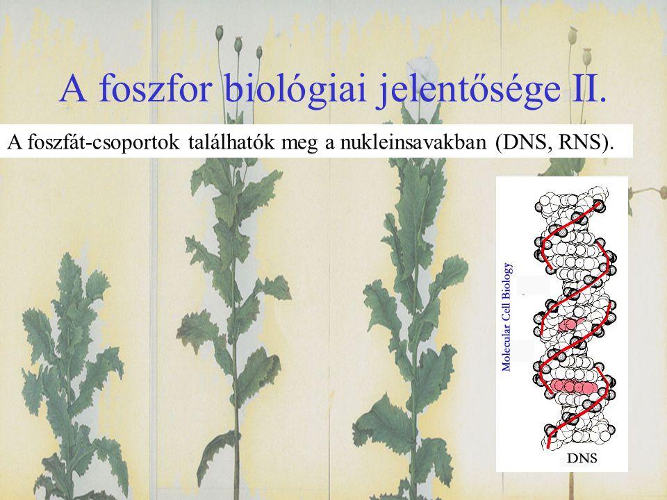 A foszfor biológiai jelentősége II.