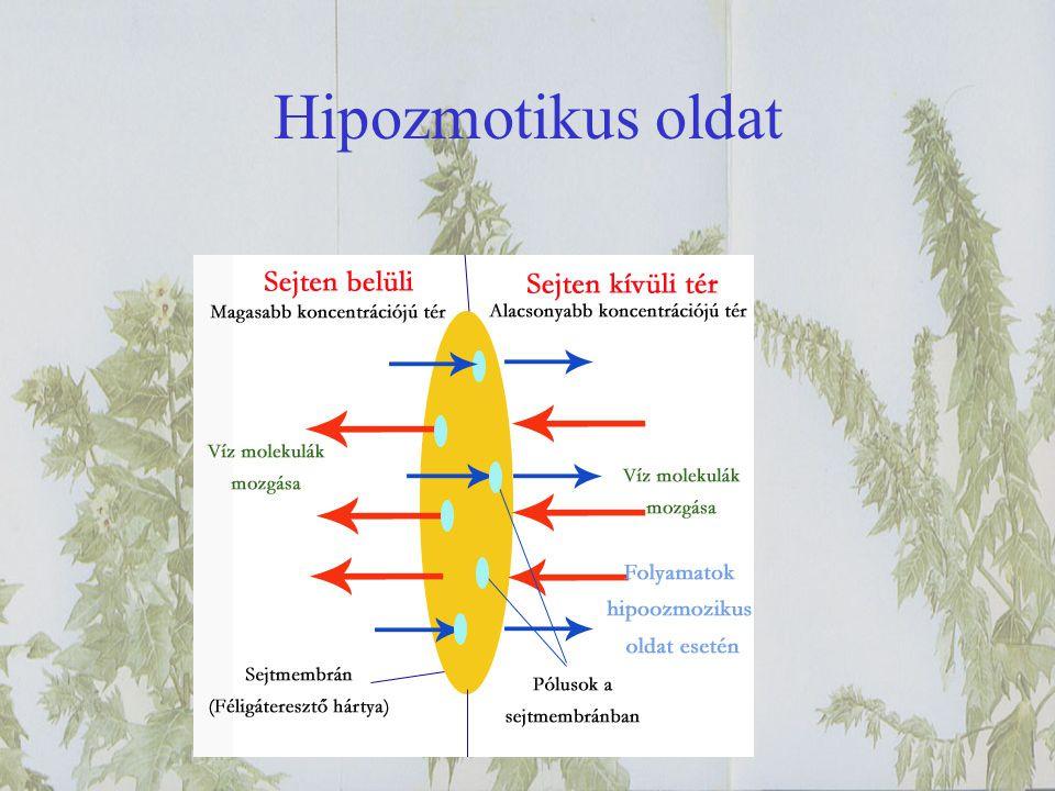 Hipozmotikus oldat