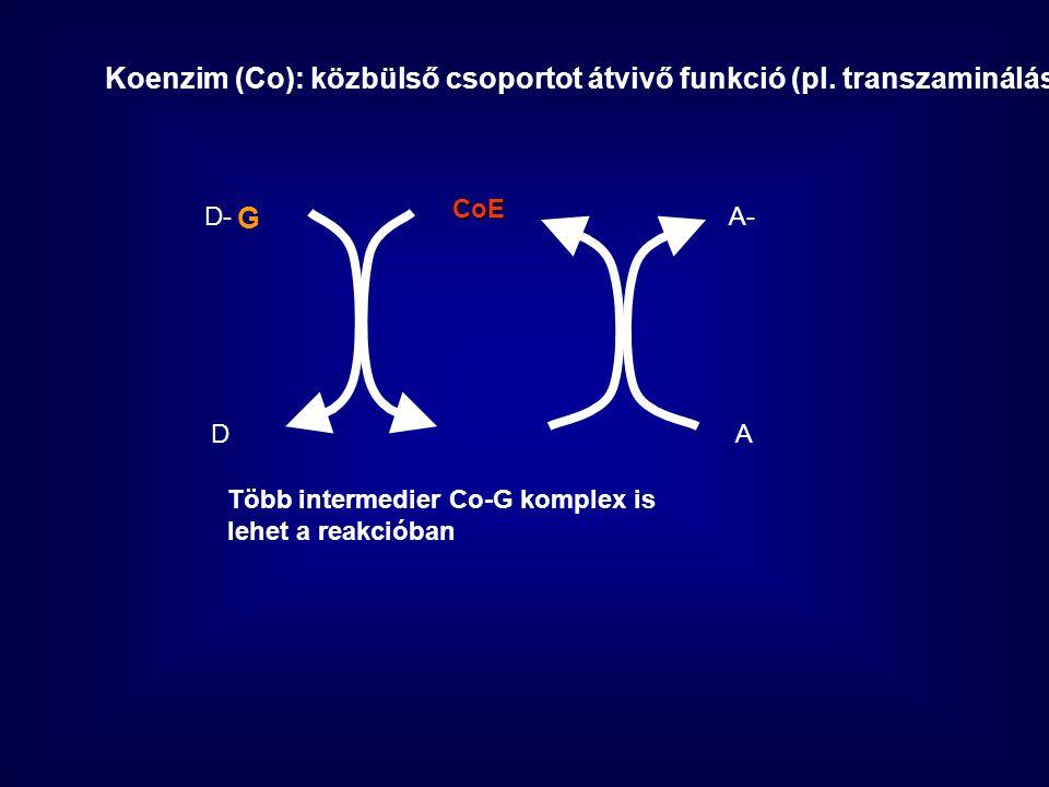 Koenzim (Co): közbülső csoportot átvivő funkció (pl. transzaminálás)
