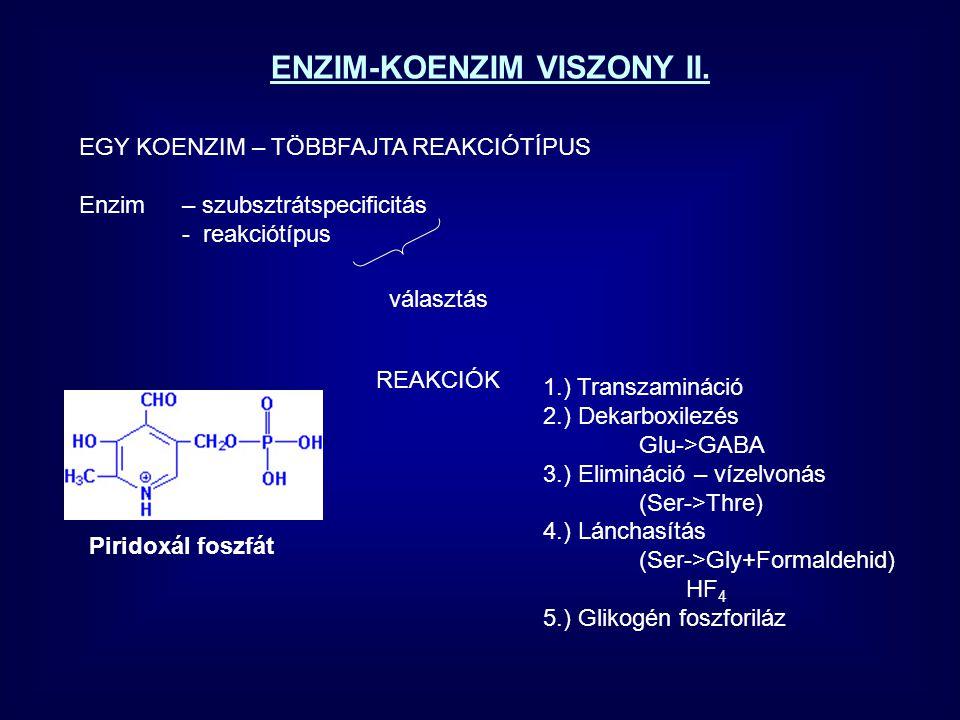ENZIM-KOENZIM VISZONY II.