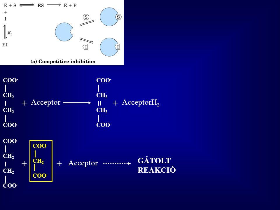 + + + + Acceptor AcceptorH2 GÁTOLT REAKCIÓ Acceptor COO- CH2 COO- CH2