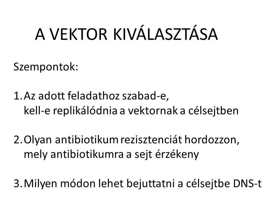 A VEKTOR KIVÁLASZTÁSA Szempontok: