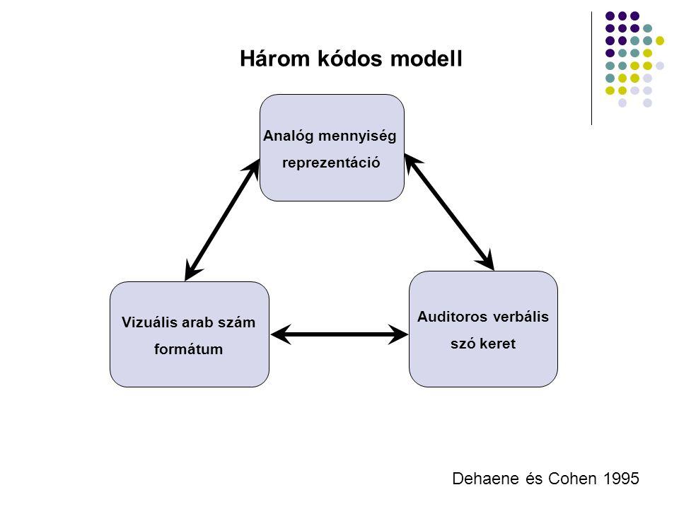 Három kódos modell Dehaene és Cohen 1995 Analóg mennyiség