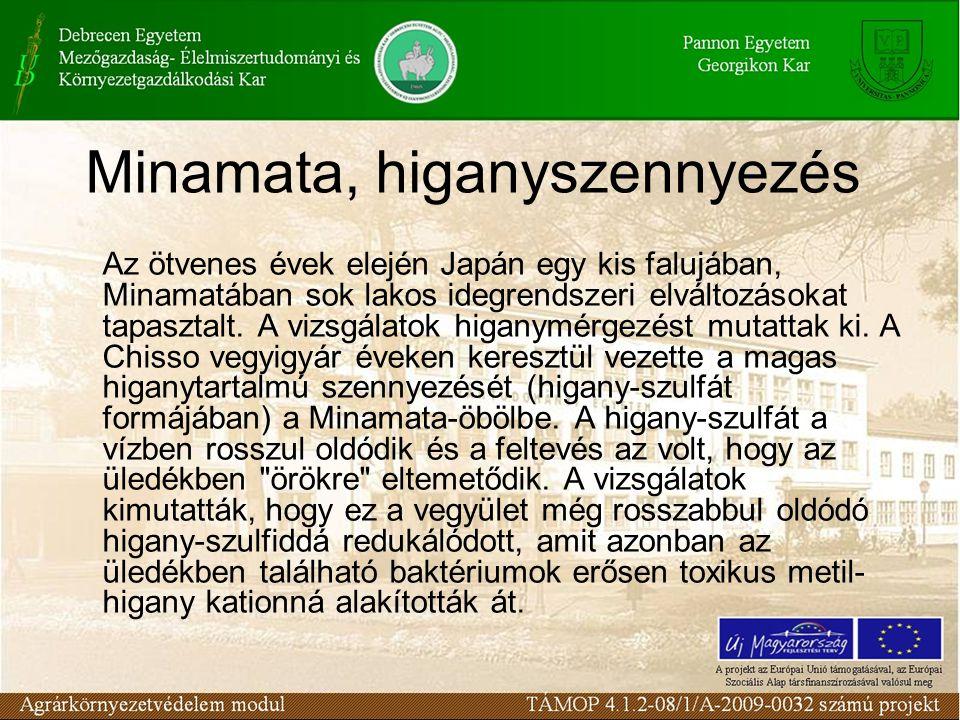Minamata, higanyszennyezés
